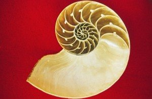 The Secret Language of Nature - nautilus - personality trait