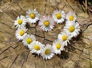 pexel-daisy-heart-flowers-flower-heart-large