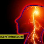 What's the link between the Brain and Immune System